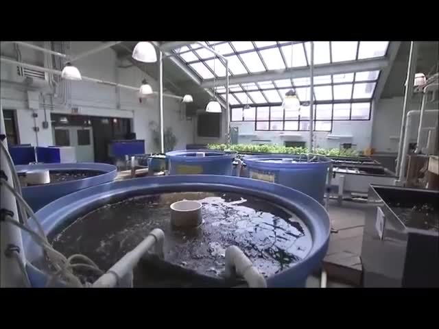Aquaponics Books