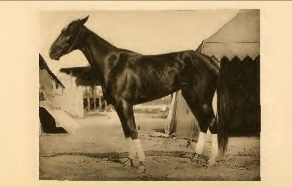 horse training books
